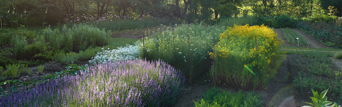Our biodynamic medicinal plant gardens